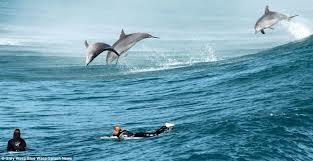 bondi dolphins